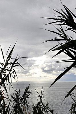 Blick aufs Meer - p949m658738 von Frauke Schumann