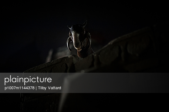 Head of a goat at night - p1007m1144378 by Tilby Vattard