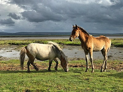 Horse and pony together - p1048m2016611 by Mark Wagner
