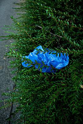 Blaue Tüte in Busch - p1611m2182325 von Bernd Lucka