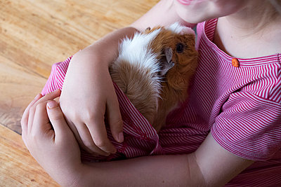 Guinea-pig - p522m944539 by Pauline Ruhl Saur