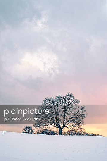 Tree in winter at sunset - p879m2295228 by nico