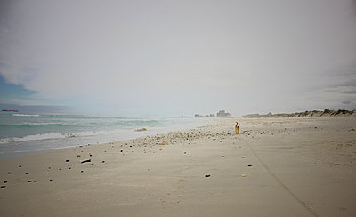 South Africa, Dog on the beach - p1640m2245843 by Holly & John