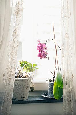 Orchid on windowsill - p312m1113743f by Helen Karlsson