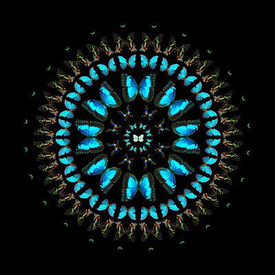 Mandala Schmetterling - p587m1104313 von Spitta + Hellwig