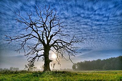 Toter Baum - p2270573 von Uwe Nölke