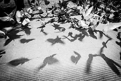 Taubenschatten - p1085m912432 von David Carreno Hansen