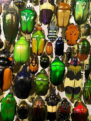 Insekten - p1189m2263845 von Adnan Arnaout