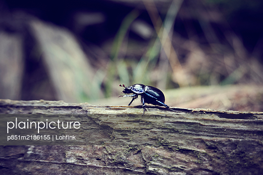 Beetle - p851m2186155 by Lohfink