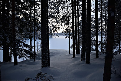 Snow covered coniferous forest - p1235m2064694 by Karoliina Norontaus