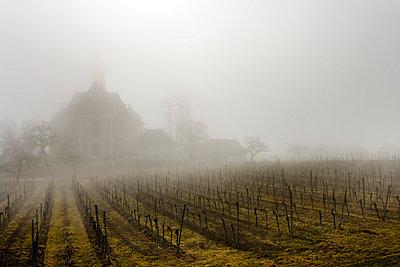 Weinreben vor der Wallfahrtskirche Birnau - p248m715352 von BY