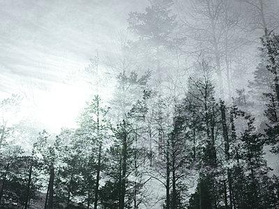 Schemenhafte Landschaft - p945m1487831 von aurelia frey