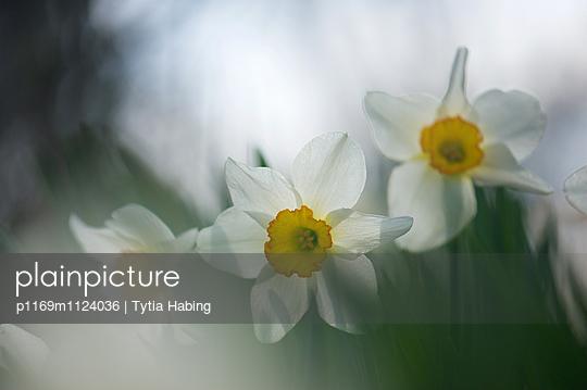 p1169m1124036 von Tytia Habing
