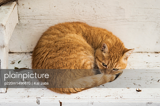 Katze chillt - p220m1496870 von Kai Jabs