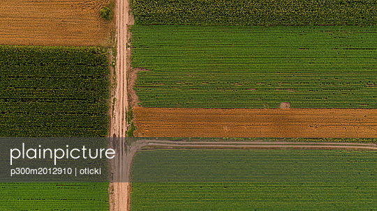 Serbia, Vojvodina, Aerial view of corn, wheat and soybean fields in the late summer afternoon - p300m2012910 von oticki