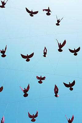 Fakevögel  - p1340m2020690 von Christoph Lodewick