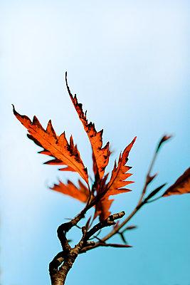 Herbstlich    - p450m1077648 von Hanka Steidle