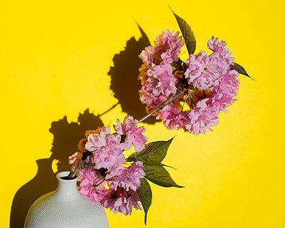 Cherry blossom branch - p801m2257703 by Robert Pola