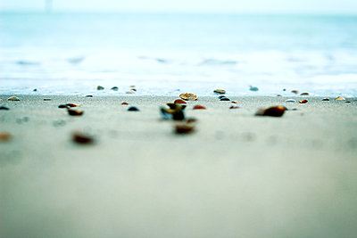 Shells on beach - p879m1444669 by nico