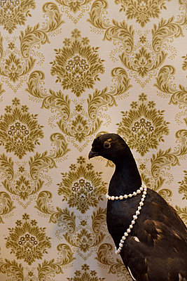 Eurasian Black Grouse - p1235m1526006 by Karoliina Norontaus
