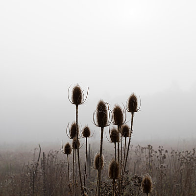 Flowers in the mist in Normandy - p1138m1093878 by Stéphanie Foäche