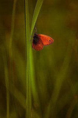 Butterfly - p1412m1575003 by Svetlana Shemeleva