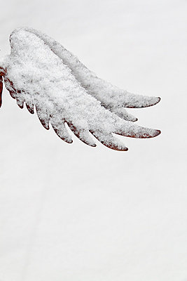 Snow covered wing - p739m776877 by Baertels