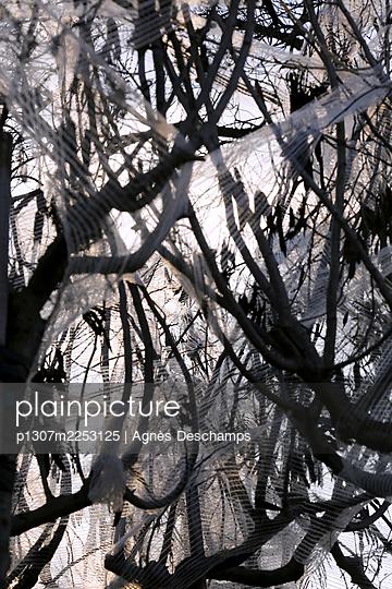 Tree wrapped in plastic - p1307m2253125 by Agnès Deschamps