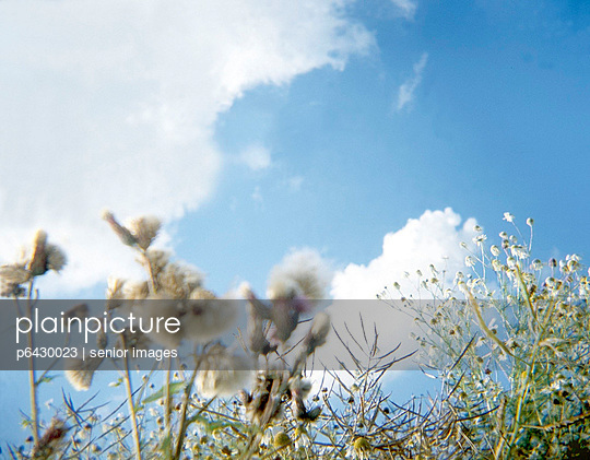 Pflanzen auf einer Sommerwiese  - p6430023 von senior images