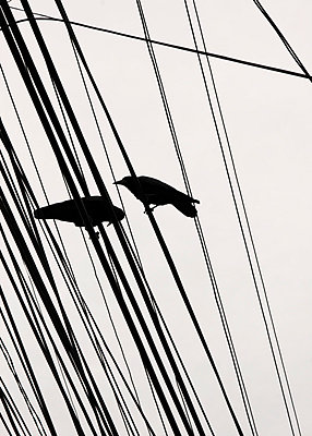Crows on a power line - p7580058 by L. Ajtay