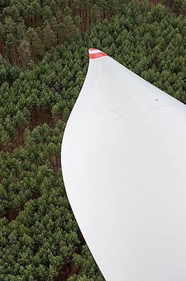 Flügel mit Kiefernwald - p1079m1184987 von Ulrich Mertens