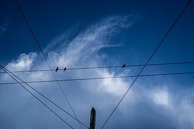 Telefonleitungen in Galway - p1082m2248574 von Daniel Allan