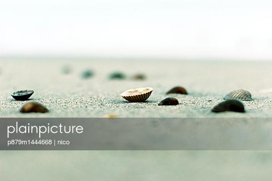 Shells on beach - p879m1444668 by nico