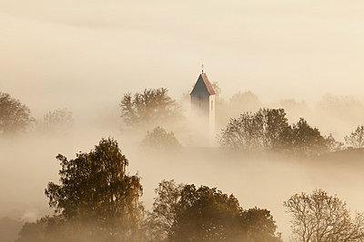 View of tree in fog - p300m659981f by Martin Siepmann
