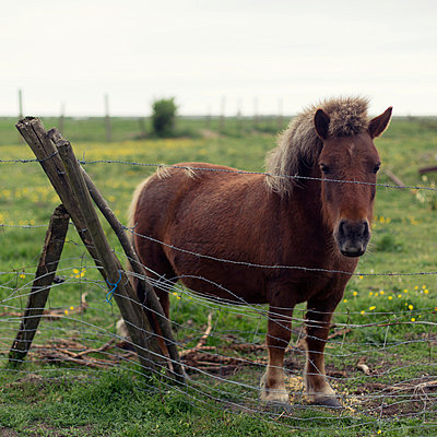 Pony - p631m913032 by Franck Beloncle
