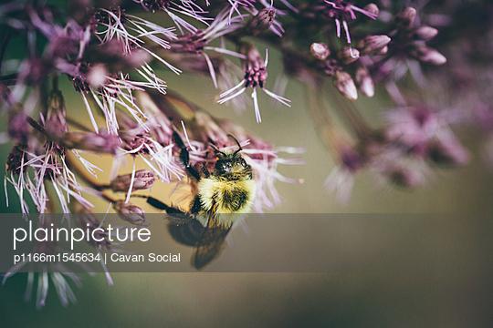 p1166m1545634 von Cavan Social