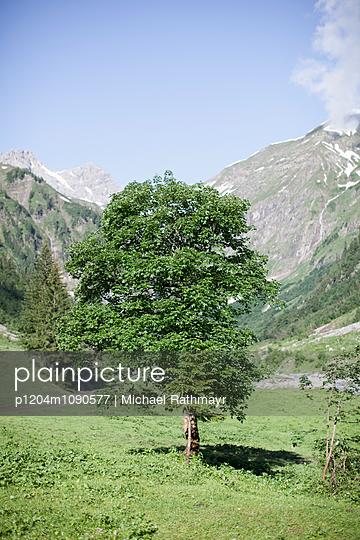 Baum - p1204m1090577 von Michael Rathmayr