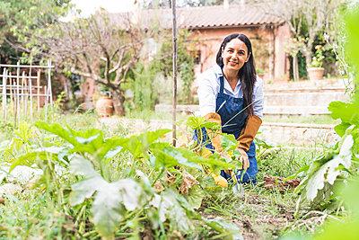 Smiling mature woman kneeling while harvesting vegetables in garden - p300m2221147 by Francesco Morandini