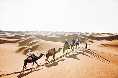 A caravan in the desert - p5754654 by Roine Magnusson
