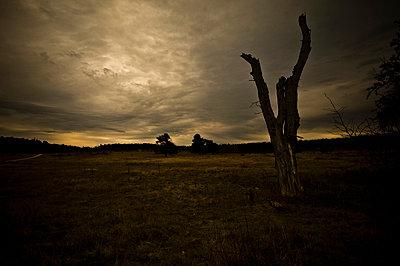 Eerie landscape - p947m658338 by Cristopher Civitillo