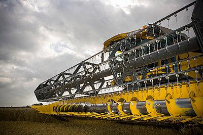 Corn harvest - p1057m1440420 by Stephen Shepherd