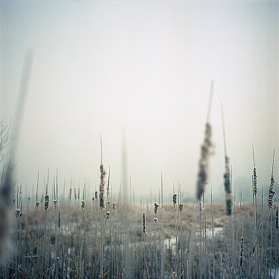 Winter - p1186m972780 by Christine Henke