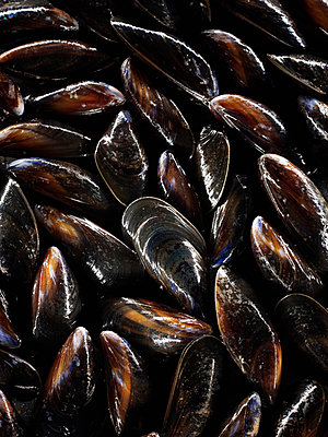 Close up of mussel shells - p64114731f by Patrick Llewelyn-Davies