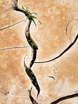 Risse im Wüstensand - p8870055 von Christian Kuhn