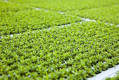 Greenhouse - p902m1031567 by Mölleken