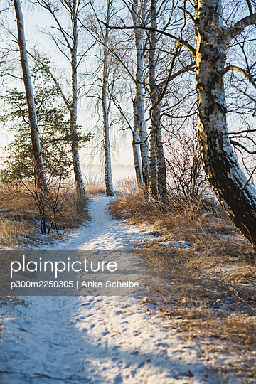 Germany, Brandenburg, Mahlow, Snow on path at winter day - p300m2250305 by Anke Scheibe