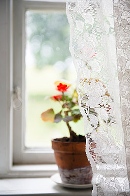 Lace curtain and flower pot on windowsill - p312m889363f by Johner