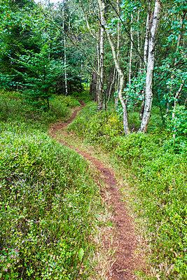 Forest track - p930m1491887 by Ignatio Bravo