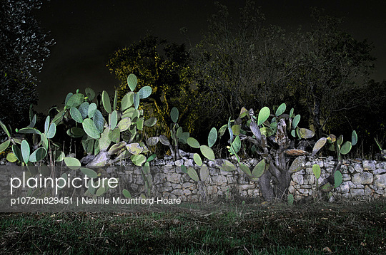 Cactuses against stone wall at night - p1072m829451 by Neville Mountford-Hoare