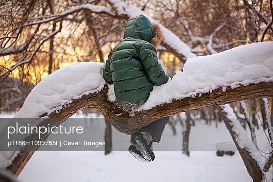 p1166m1099785f von Cavan Images